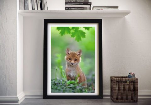 Cute Fox Cub Framed Wall Art Sydney