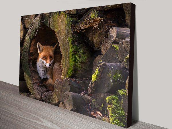 Fox Hideout Picture Canvas Art