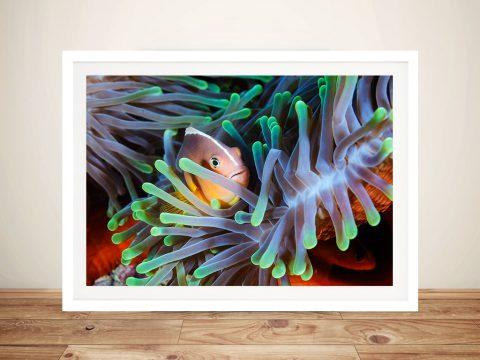 Clownfish Reef Framed Wall Art