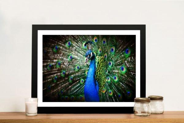 Amazing Peacock Framed. Wall Art Docklands Melbourne