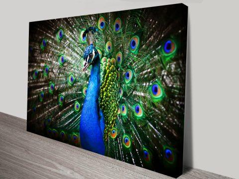 Amazing Peacock Animal Wall Art on Canvas