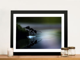 Ant reflections Framed Wall Art