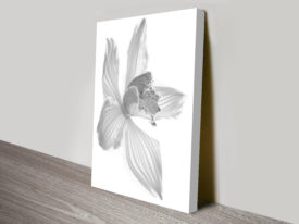 Orchid in Grey 3 Black and White Canvas Print