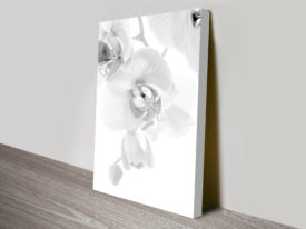 Orchid black and white print