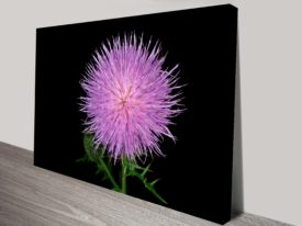 Pink Radiance flower canvas print