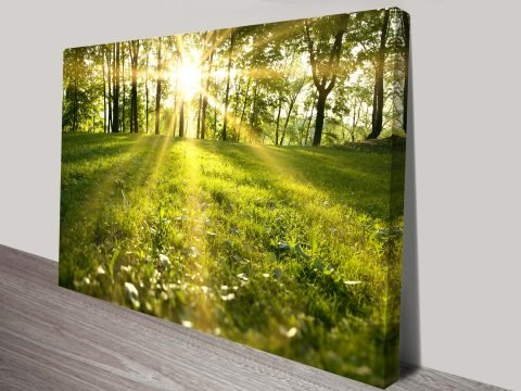 Sunlit Meadows Canvas Wall Art