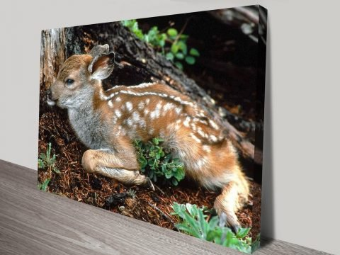 Black Tailed Deer Fawn Animal Wall Art on Canvas