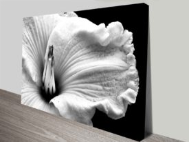 Black & White Bloom Floral Canvas Art