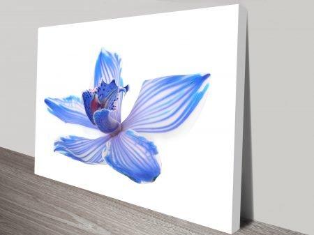 Blue Orchid Flower Art