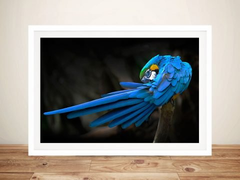 Blue Macaw Parrot Canvas Beautiful Artwork