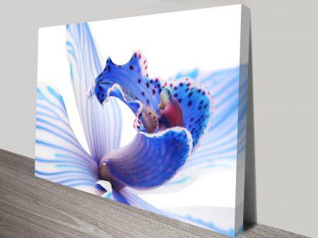 Blue Orchid 3 Flower Art
