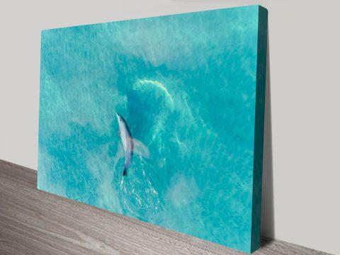 Buddy Dolphin Matt Day Photo Canvas Prints