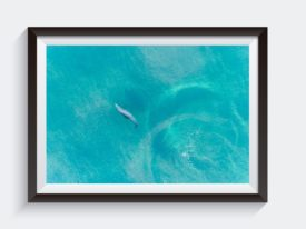 Buddy Dolphin Framed Wall Art