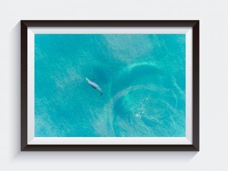 Buddy Dolphin Framed Wall Art