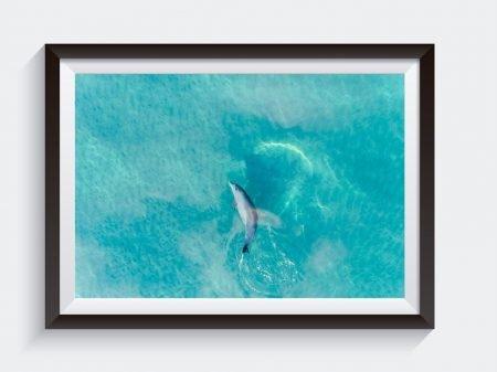 Buddy Dolphin Matt Day Photo Framed Art