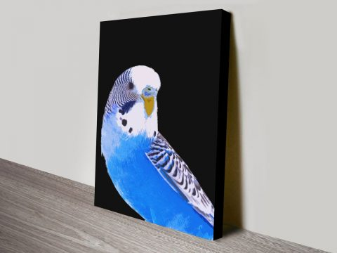 Budgie-I-canvas-print_preview