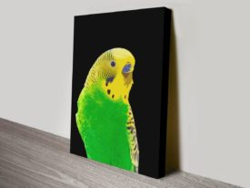 Budgie-II-s-canvas-print_preview