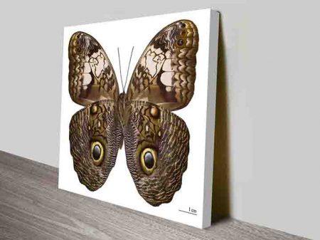 Damien Hirst Caligo Martia Butterfly Wall Art