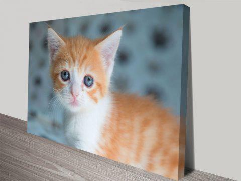 Cute Tabby Kitten Canvas Print Wall Art