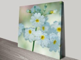Daisy-Floral-s-canvas-print_preview