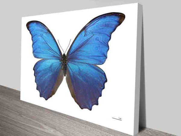 Damien Hirst Morphodidius Butterfly Wall Art