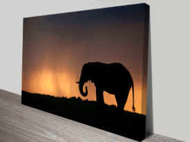 Dusk Vigilance Elephant Photo Canvas Prints