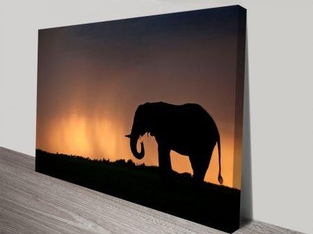 Dusk Vigilance Elephant Photo Canvas Prints
