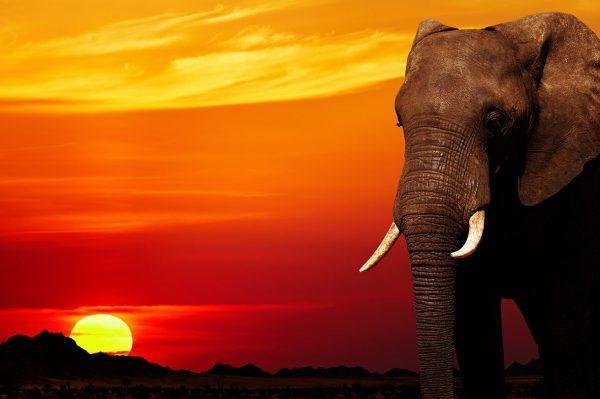 Elephant African Sunset Home Wall Decor