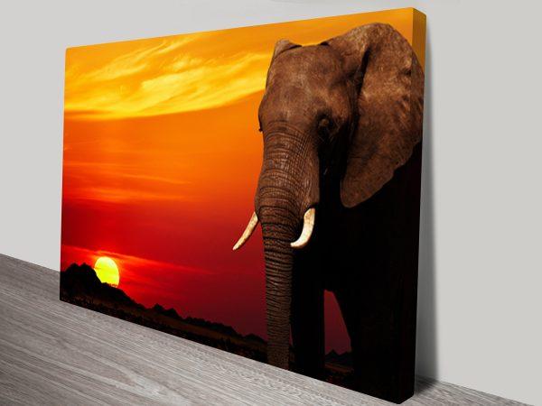 Elephant Sunset Animal Wall Art on Canvas