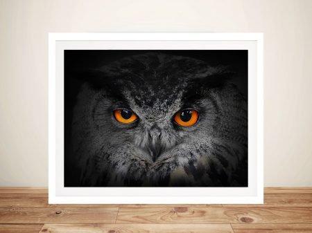 Eyes of the Owl Framed Wall Art Melbourne
