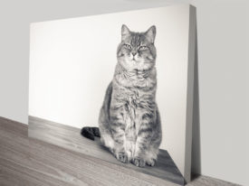 Feline Grace Cat Canvas Print Wall Art From Photos