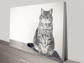 Feline Grace Cat Canvas Print Wall Art From Photos
