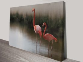 Flamingos Wall Art Australia