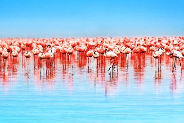 Flamingos photo canvas artwork