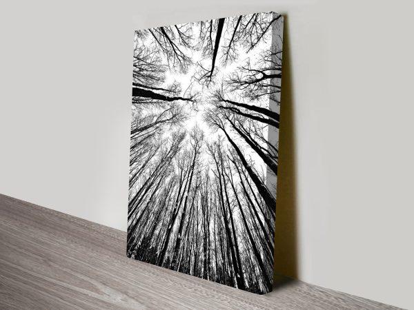 Forest Skylight Black and White Art Print