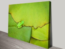 Frog-on-a-leaf-s-canvas-print_preview