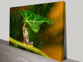 Frog and Leaf Umbrella Photo Print