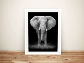 Gentle Giant Elephant Framed Photo Wall Art