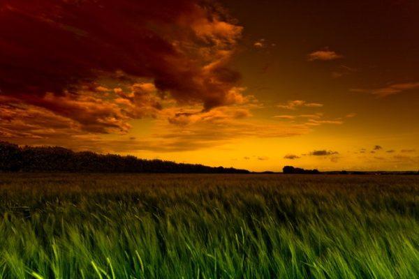 Green Fields Landscape Canvas Art