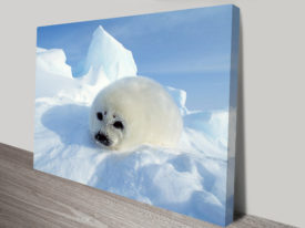 Cute Harp Seal Pup Stretched canvas print