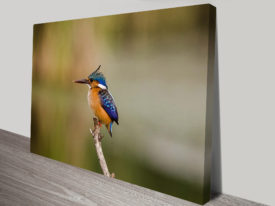Kingfishers Vigilance Animal Wall Art on Canvas