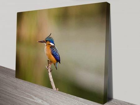 Kingfishers Vigilance Animal Wall Art on Canvas