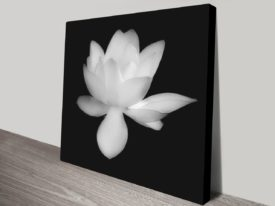 Lily-Square-canvas-print_preview