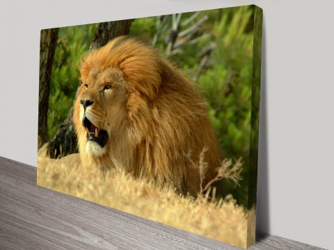 The Lion Animal Wall Art on Canvas