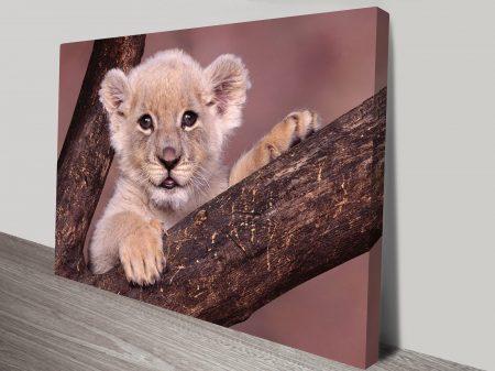 Lion Cub Animal Wall Art on Canvas