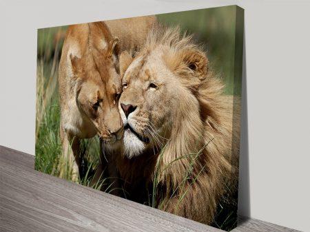 Lovers of the plains lion canvas print