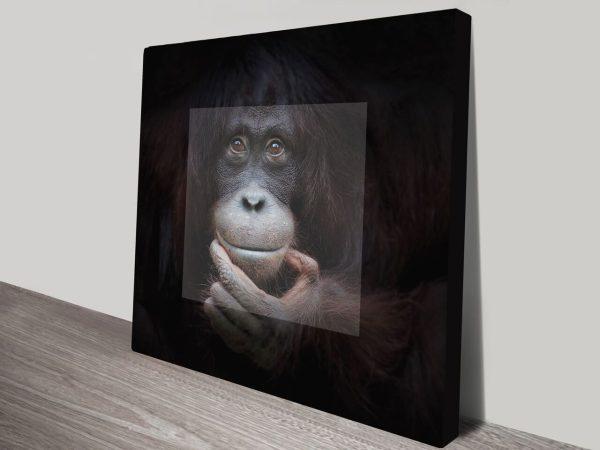 Orangutan in Contemplation