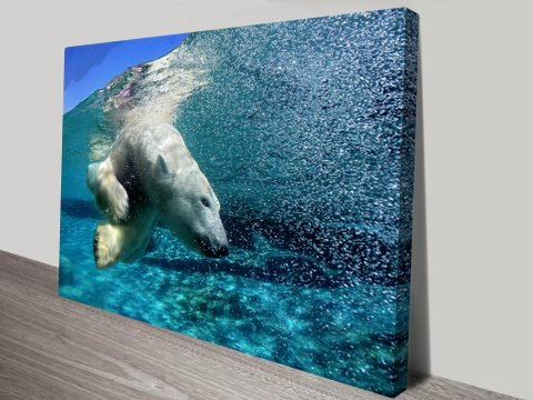 Polar bear diving canvas prints