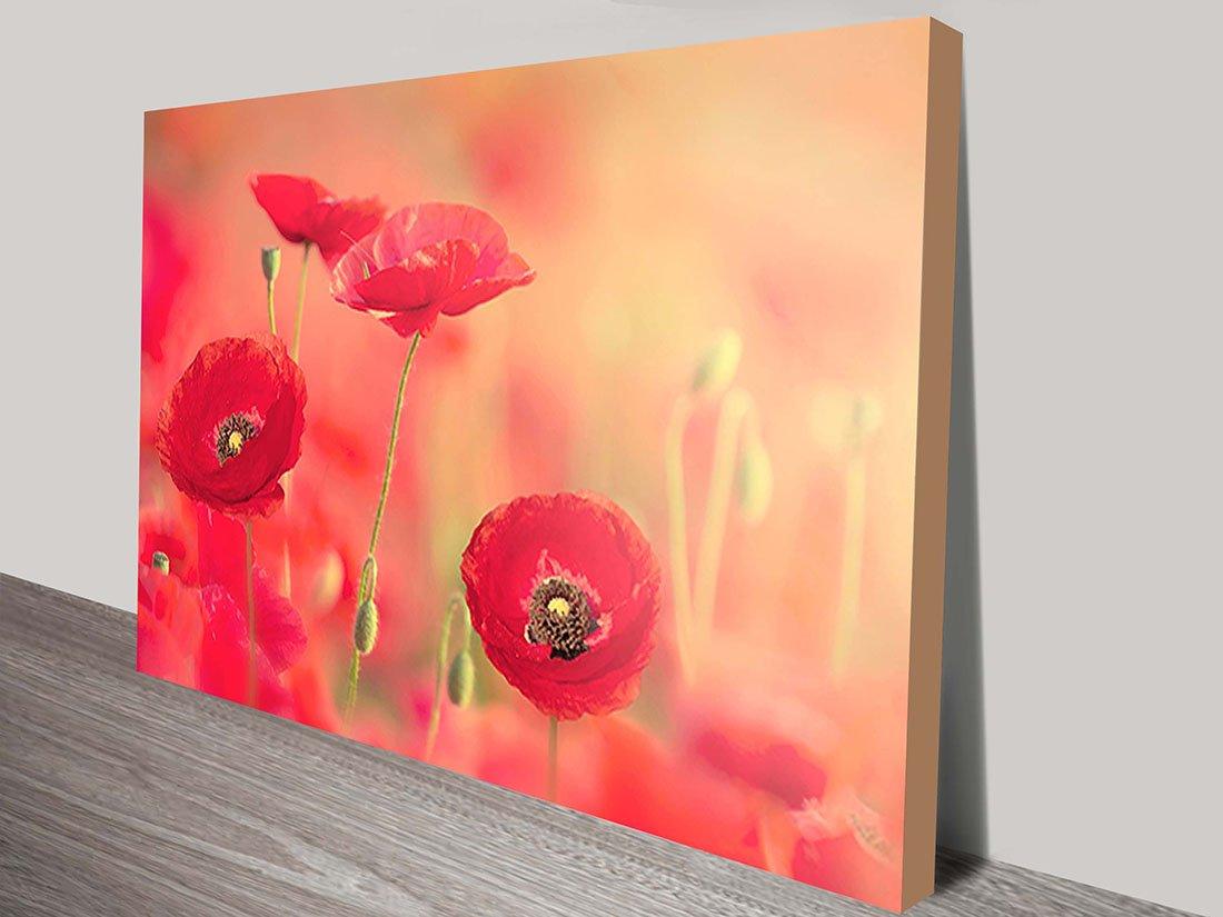 Poppy Dreams Canvas Art