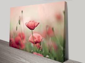 Poppy Haze Floral Wall Art